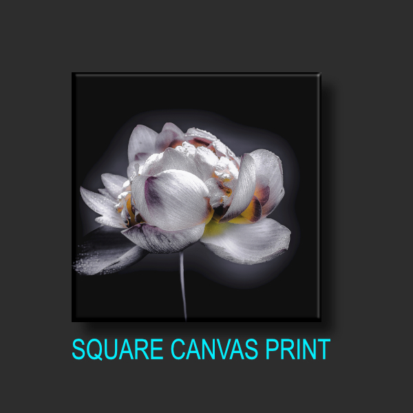 SQUARE CANVAS PRINT | Square_canvasV1_.jpg